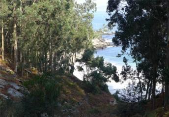 islas-cies-eukalyptus