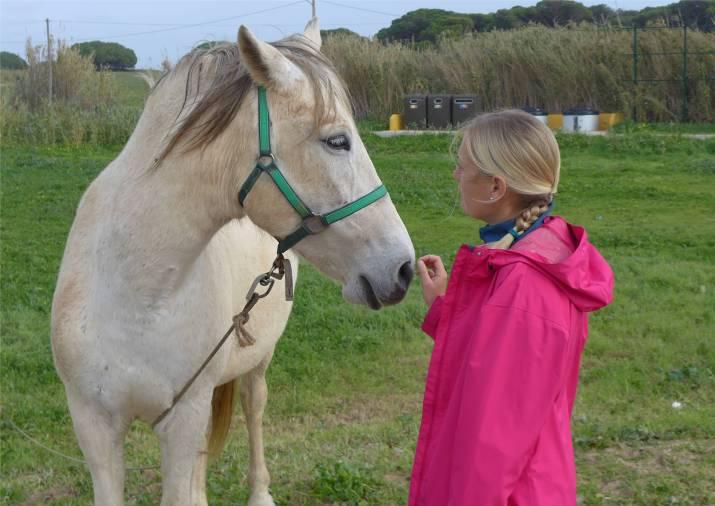 vilamoura-pferd