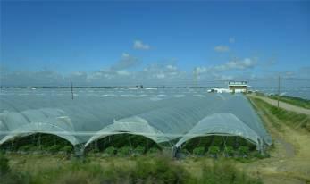 Huelva Erdbeerfelder