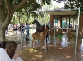 Sevilla kleine Pferde
