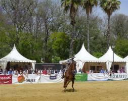 Sevilla schoene Pferde