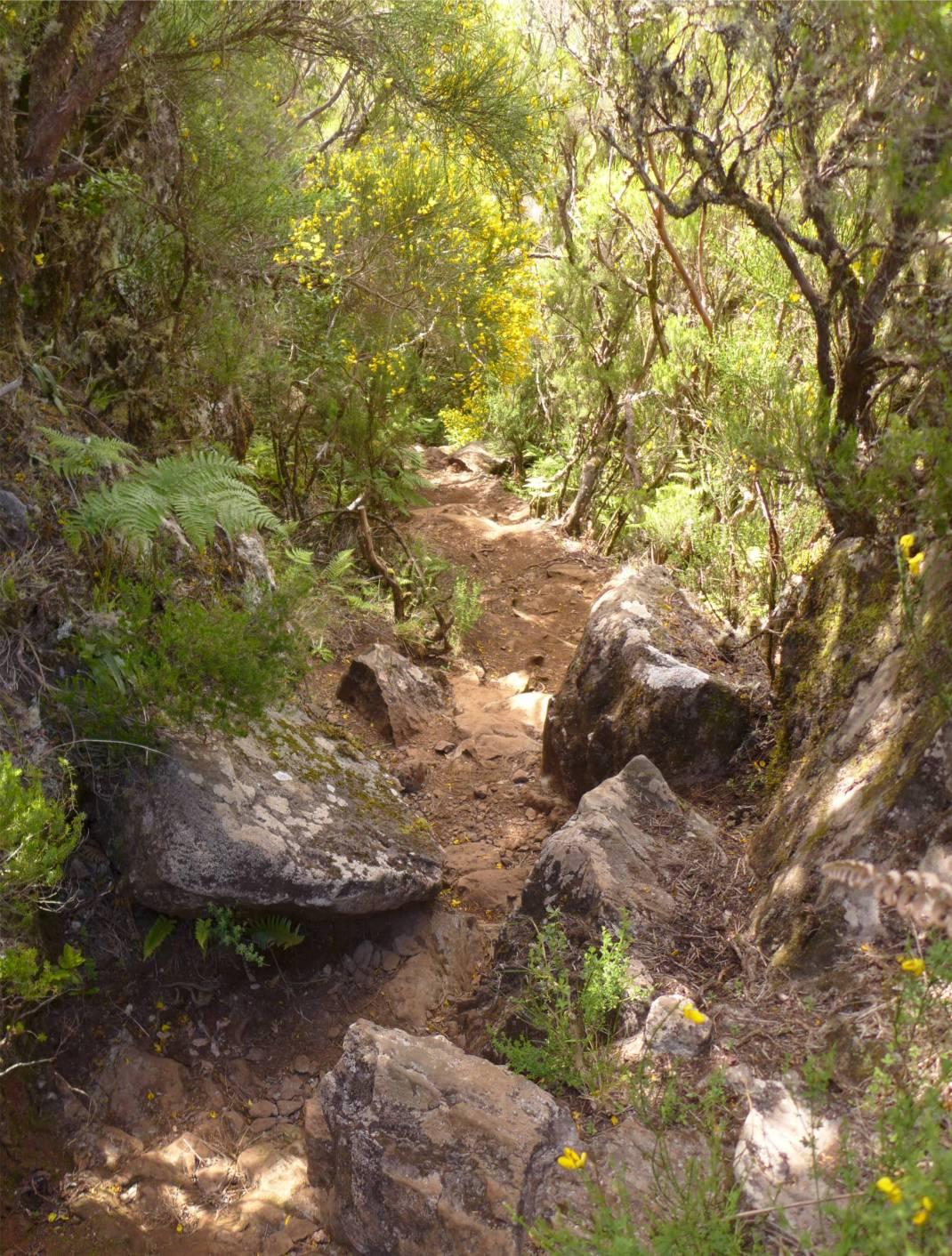 Madeira 2 Abstieg