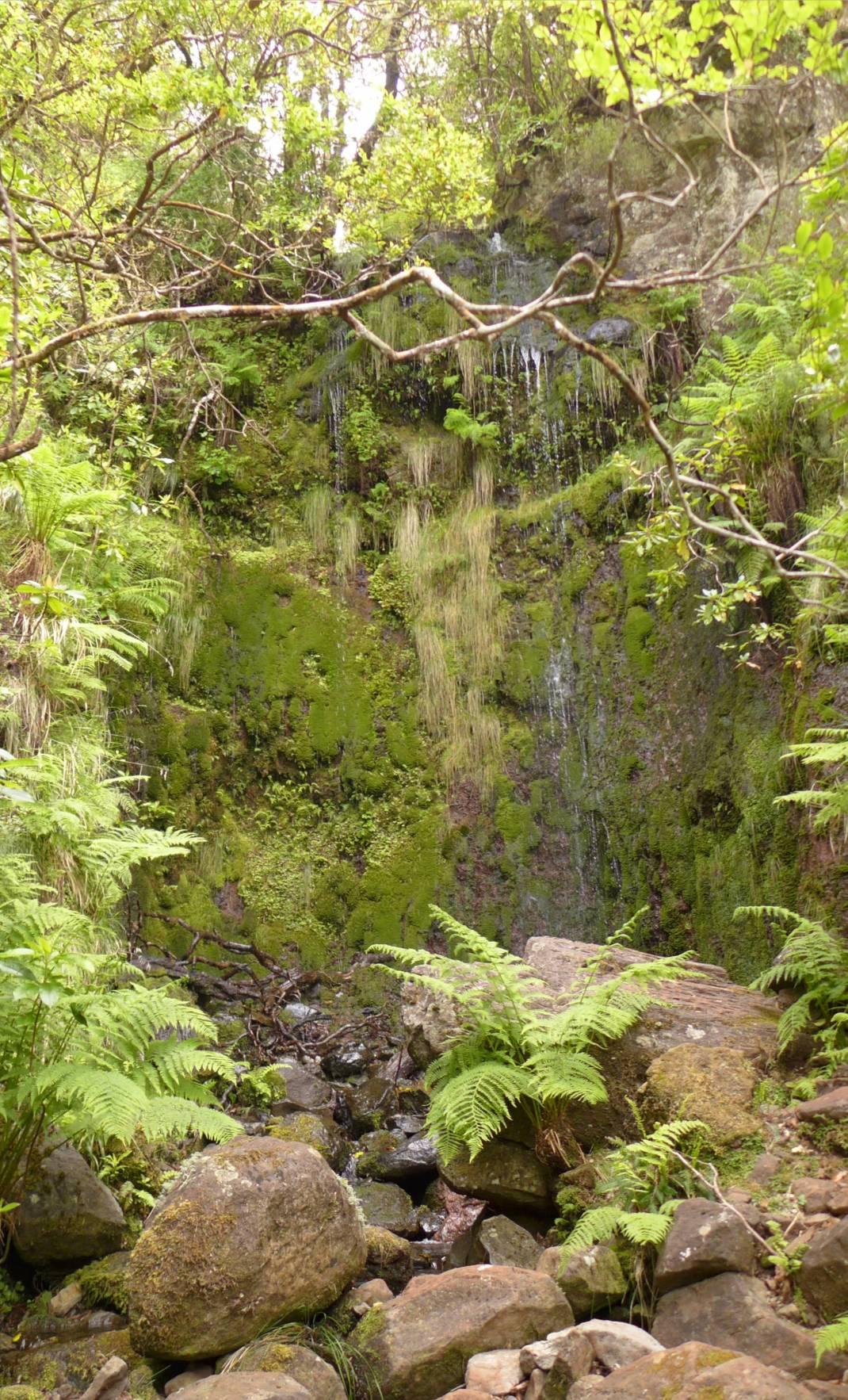Madeira 2 kleiner Wasserfall