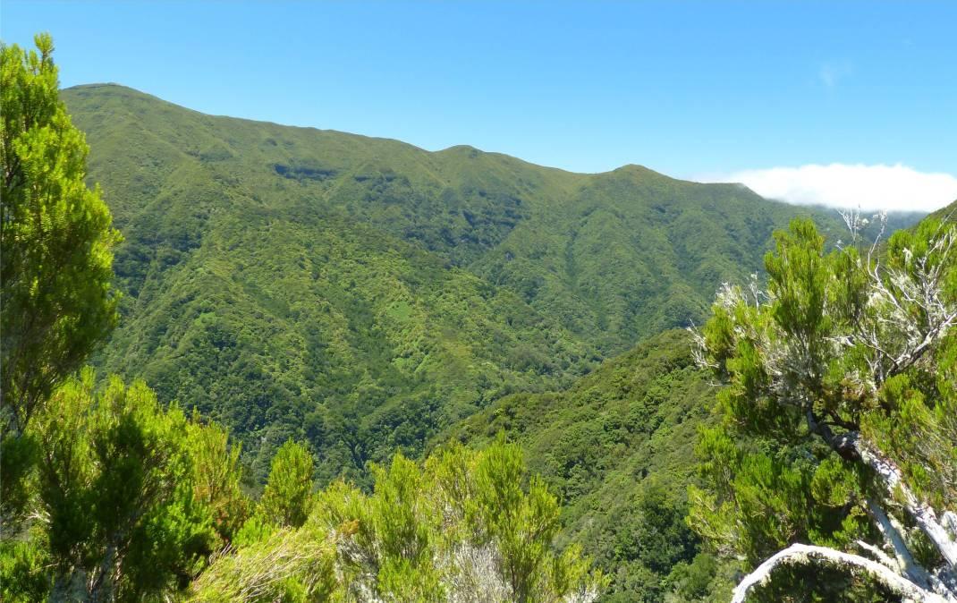 Madeira 4 gruene Berge