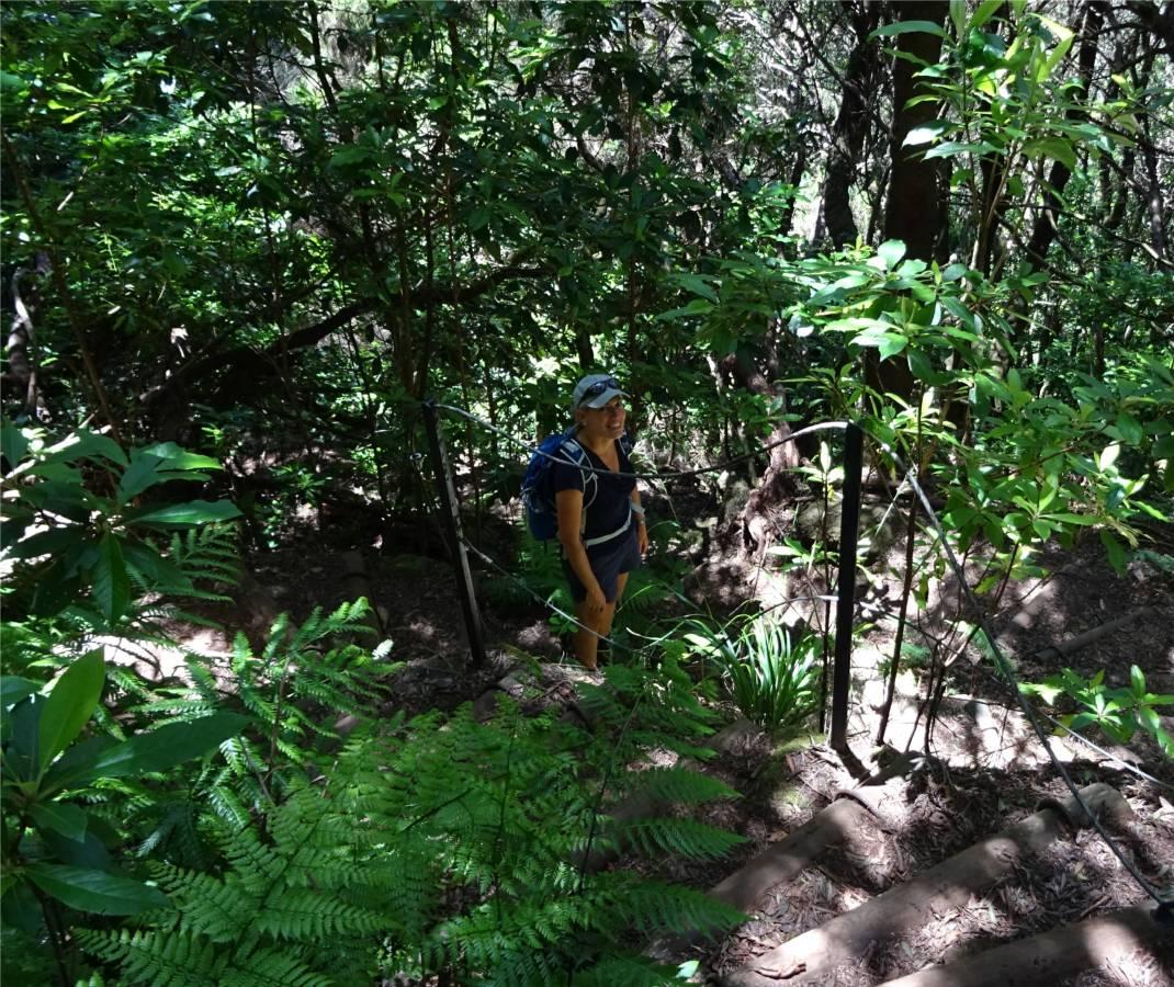 Madeira 4 Inga im Wald