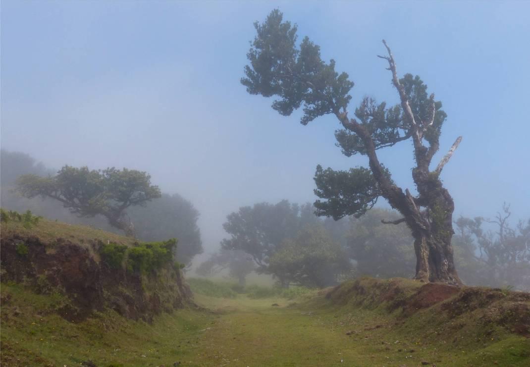 Madeira 4 Nebel lichtet sich
