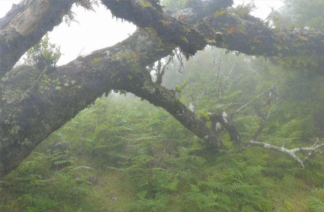 Madeira 4 Paradies fuer farne
