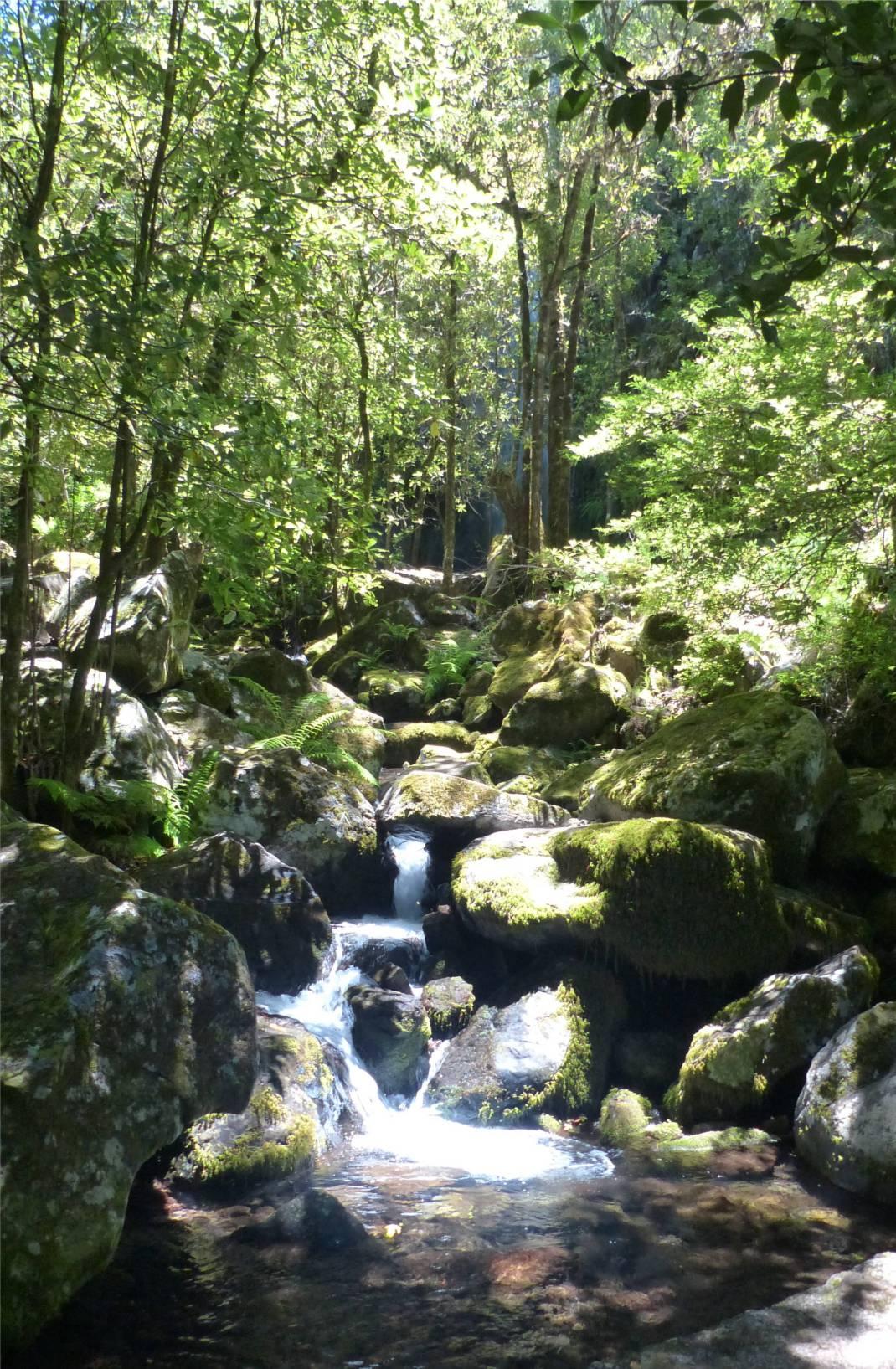 Madeira 4 verwunschener Wald