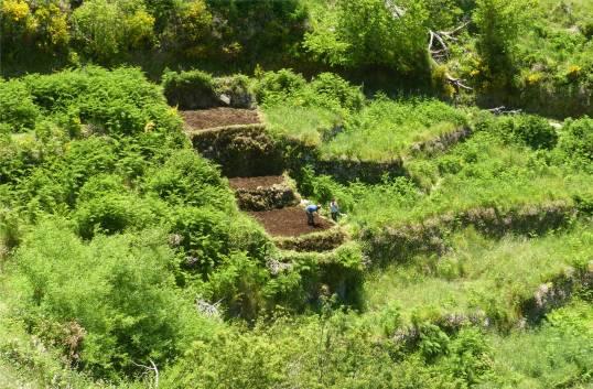 Madeira 5 Feldarbeit