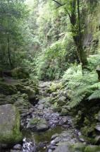 Madeira LdR dieser Wildbach speist die Levada