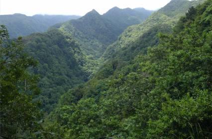 Madeira LdR Wald