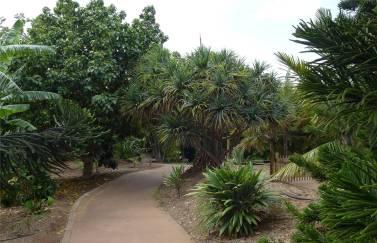 Santa Cruz Palmetum