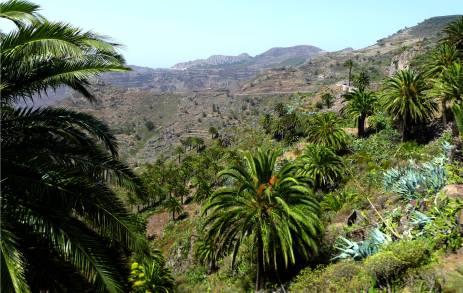 Gomera Palmen und Aussicht