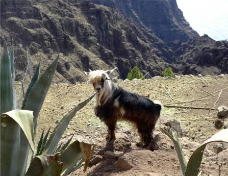 La Gomera coole Frisur