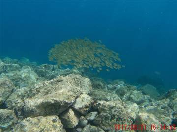 La Gomera Fischschwarm