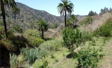 La Gomera grünes Tal