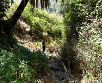 La Gomera wilde Vegetation