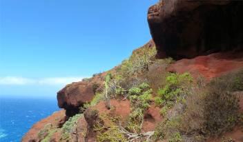 La Palma grün rot blau sehr hübsch