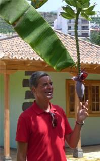 La Palma Nobbi und Banane