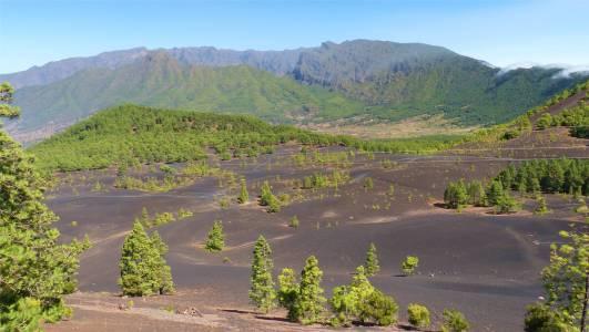 La Palma schwarze Hügel und Kiefern