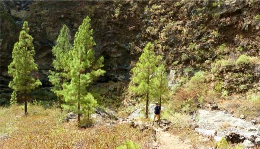 La Palma Vor der Felswand links