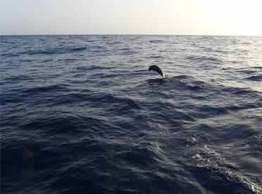 Atlantik Delfine zum Abschied 6