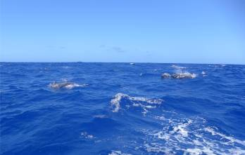 Fahrt nach Recife Delfine 1