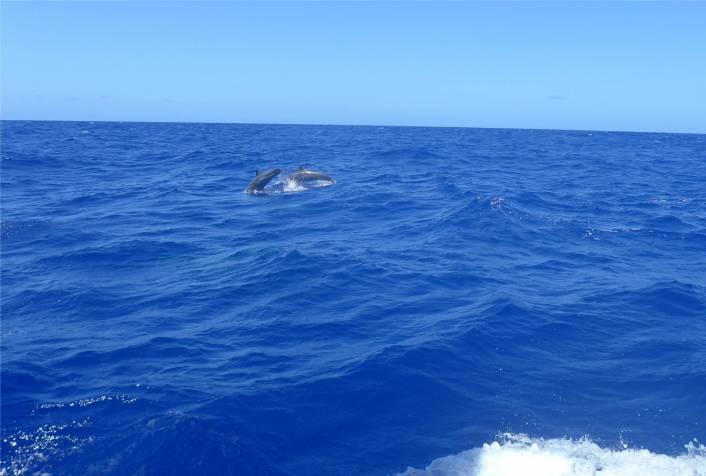 Fahrt nach Recife Delfine 2