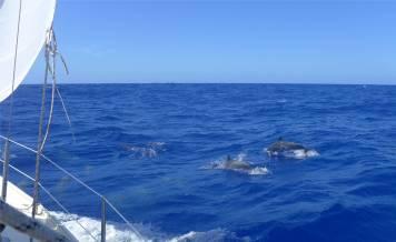 Fahrt nach Recife Delfine 4