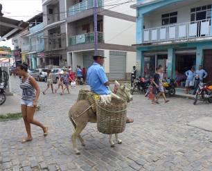 Maragogipe mit dem Esel auf der Hauptstrasse