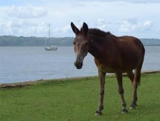Sao Francisco Gruppenbild mit Pony