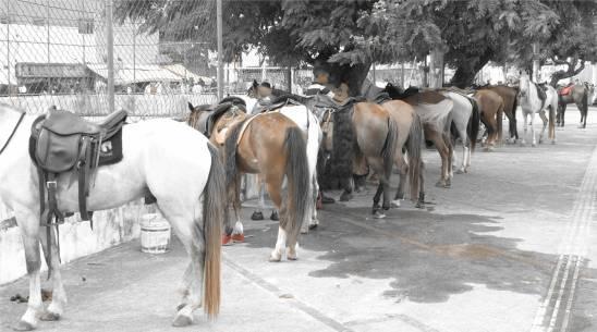 Ribeira Pferdetreffen