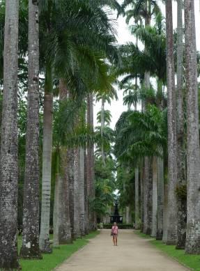 Rio botanischer Garten die Hauptallee mit den Königspalmen