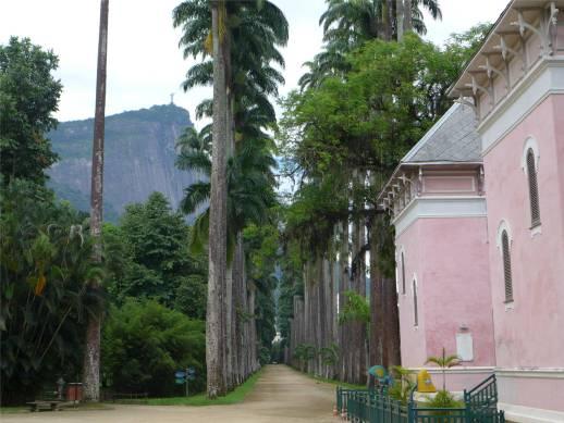 Rio botanischer Garten Königspalmen