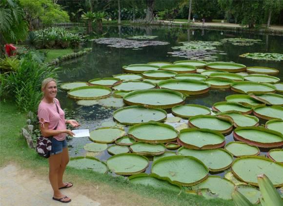 Rio botanischer Garten so entrollen sich die Blätter