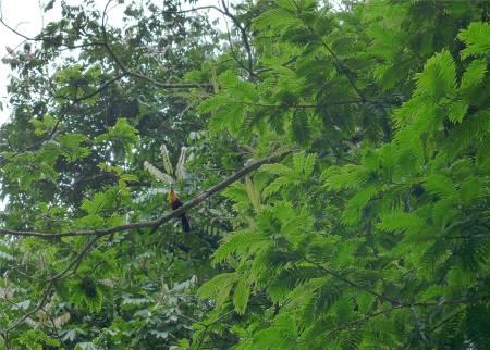 Rio botanischer Garten Tukan oder Tukanin