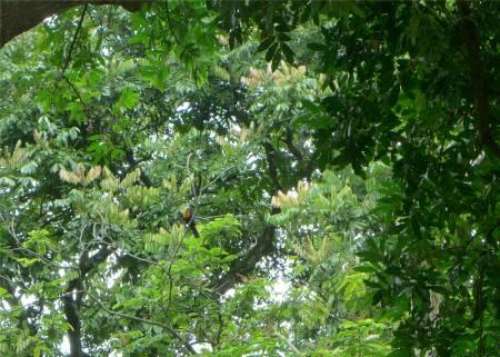 Rio botanischer Garten Tukanbeweisbild
