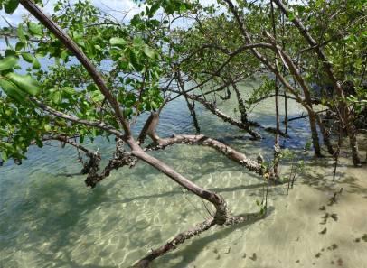 Tororo klares Wasser