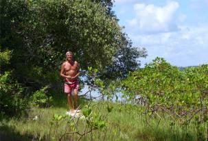 Tororo Nobbi in den Mangroven