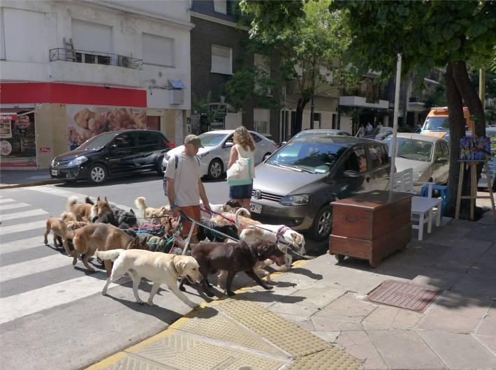 BA dog walker im EInsatz