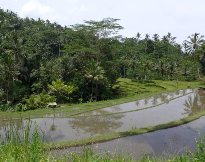 Bali Reisfelder und der Himmel