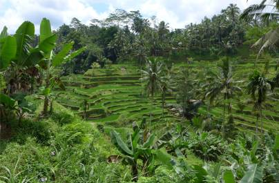 Bali Reisterrassen 2
