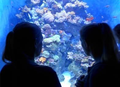 Singapore im Aquarium