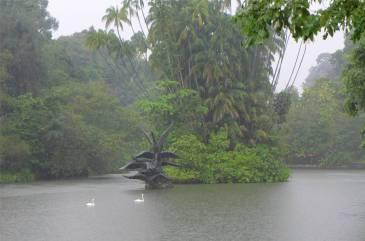 Singapore Regen im botanischen Garten