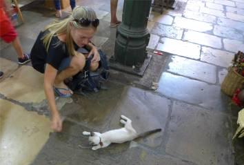 Manaus Markthalle Die Katze würde ins Handgepäck passen