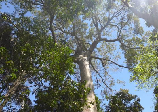 Manaus Waldspaziergang