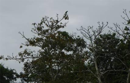 Uacari Affe mit Aussicht