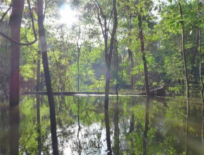 Uacari am schönsten ist die Kanuperspektive