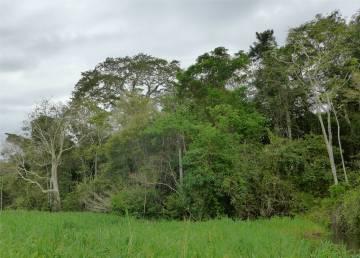Uacari die Wiese schwimmt Durchkommen nur per Boot