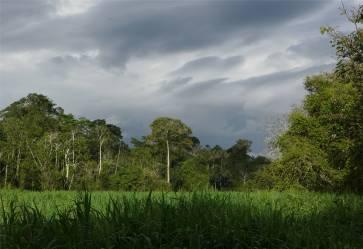 Uacari dunkle Wolken die uns kurz darauf beregnet haben